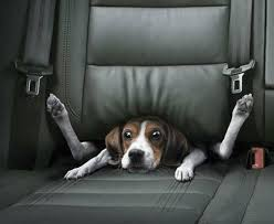 Dog owners need to have a crate when traveling
